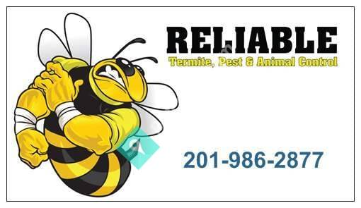 Reliable Pest and Animal